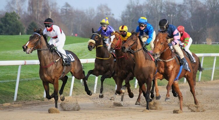How To Be Successful At Horse Racing